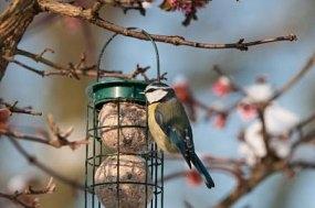 Take part in Big Garden Birdwatch - the world's largest wildlife survey!