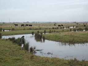 New Countryside Stewardship offers open for applications